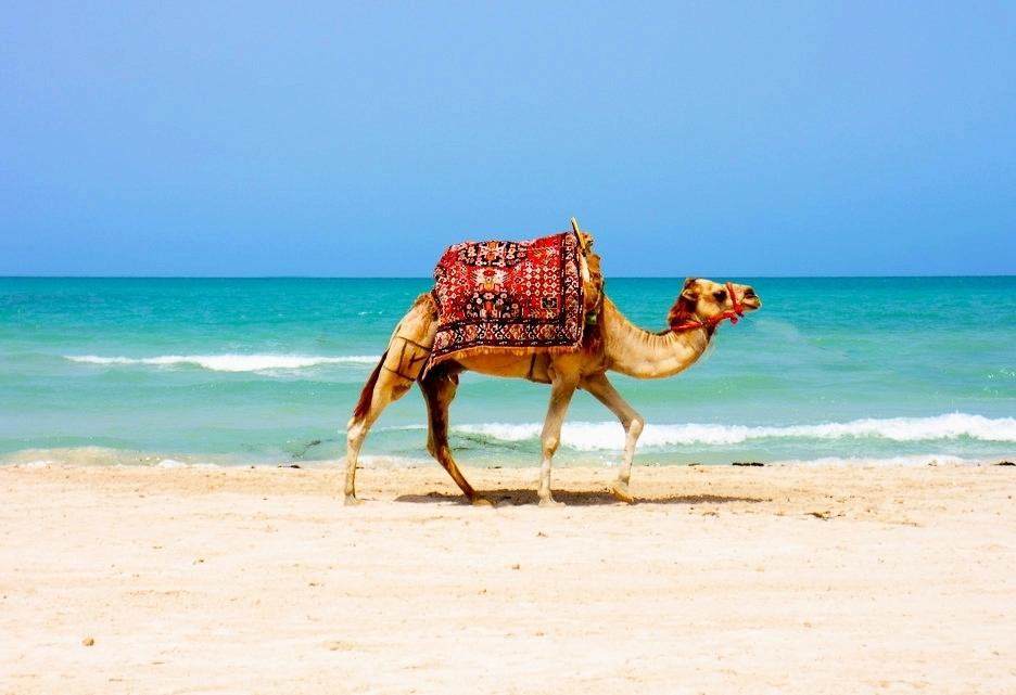 Туры в Тунис летом 2018 и на майские праздники